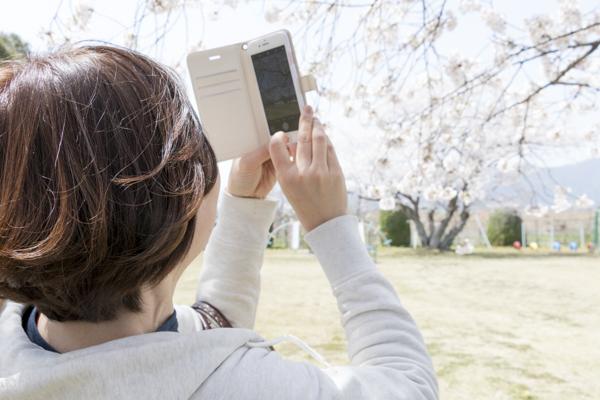 桜を撮影する